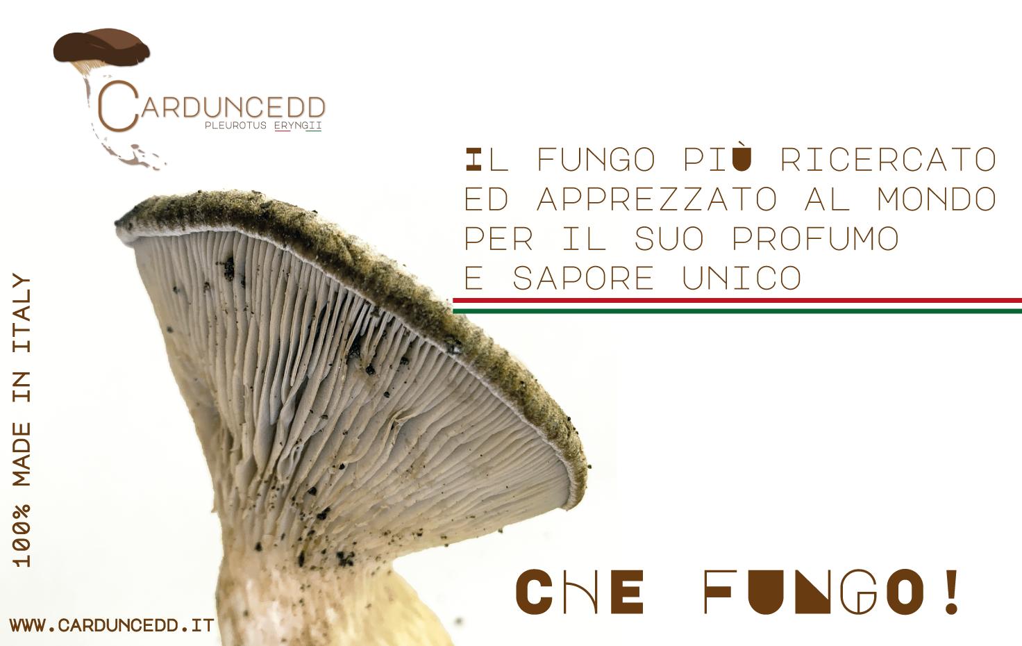 Il fungo più ricercato e apprezzato al mondo